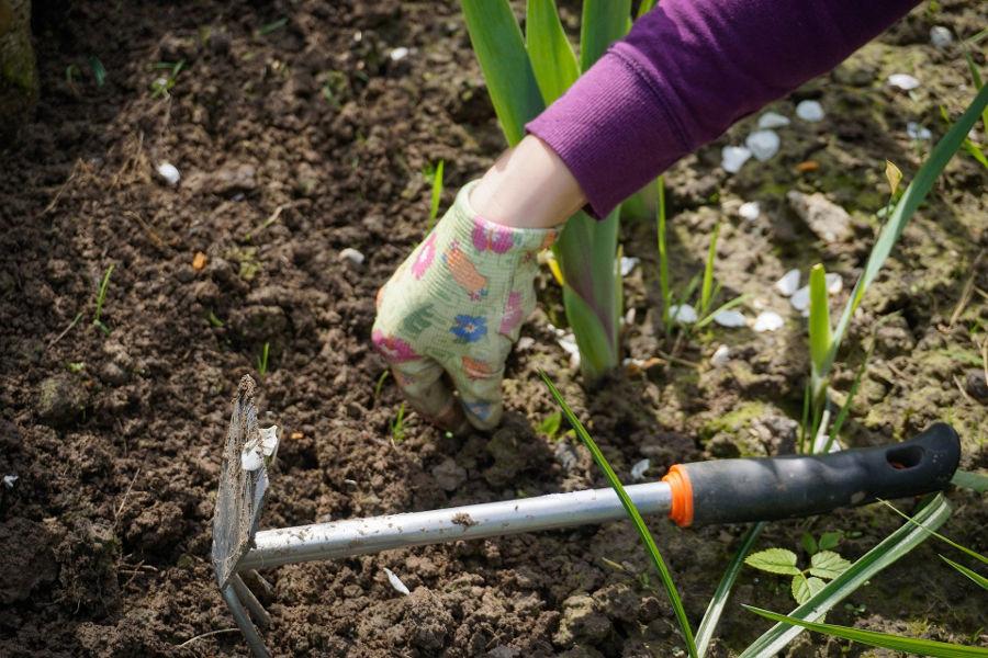 Urządzanie ogrodu – sprawdź, o czym nie możesz zapomnieć